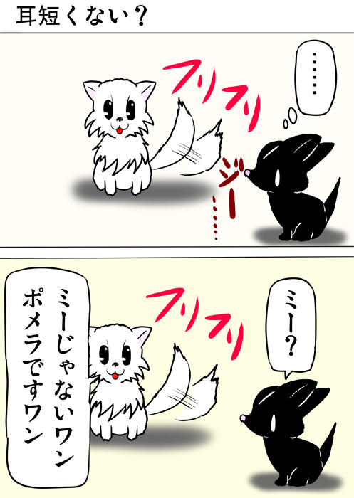 しっぽをふるポメラニアン犬 ふわもふ猫の日常四コマweb漫画263話1p