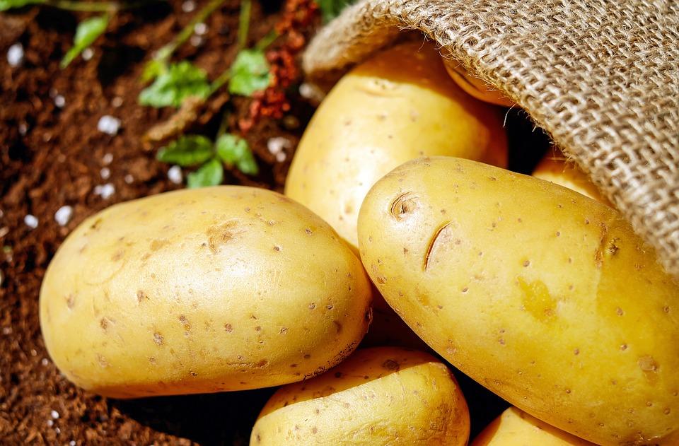 La semina delle patate e come fare