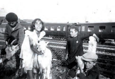 Les chèvres de D'Oliveira  - 1940