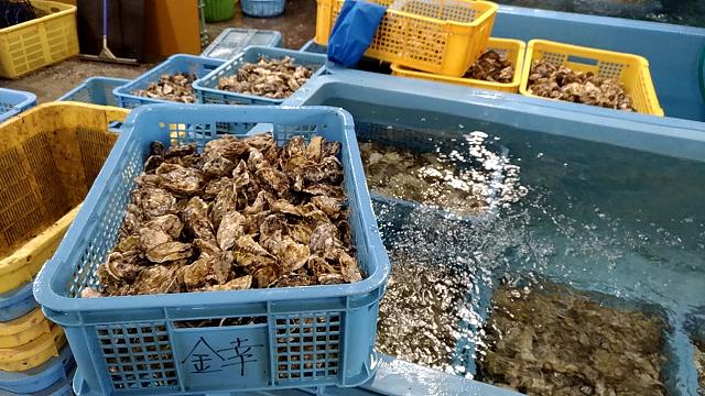苅田港の牡蠣