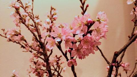 北九州のリラクゼーションマッサージ店リセッタに咲いた桜