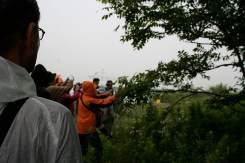 長良川河口周辺観察