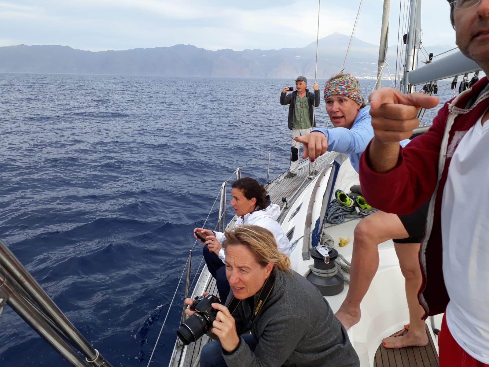 Die Crew der AVALON beobachtet eine Delfinschule