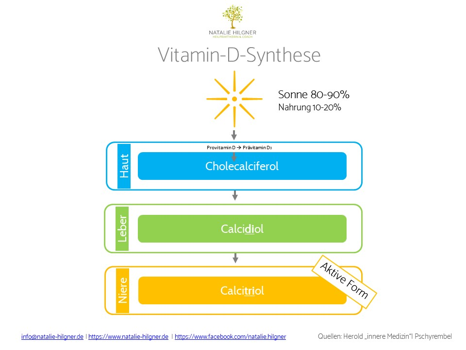 Vitamin-D-Synthese HPA Coaching Natalie Hilgner