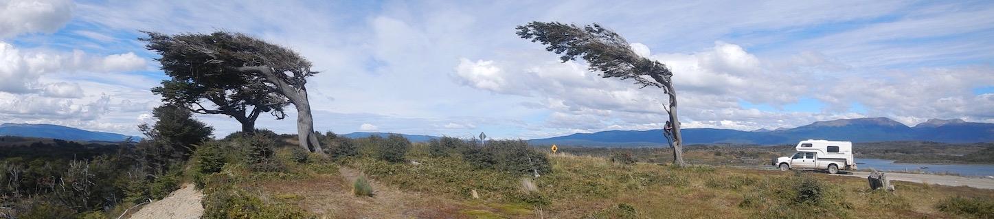 typisch Patagonien: windschiefe Bäume