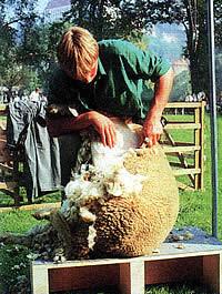 Schafwolle Naturdämmung
