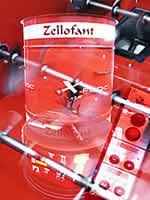 Zellofant Weiterentwicklung
