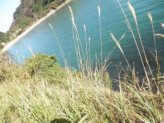 三田浜海水浴場道路下磯、三田浜海水浴場へ行く途中の道路下の隠れ穴場・・外海がシケた時、大チヌが入り込んでくる。よく探さないと釣り場がわからない。