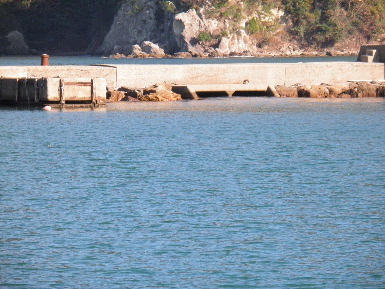 柴山港赤灯台波止船上げ近くの小突堤、横に海水の出入り口があり、釣れそうに見えて釣れない。しかし、大型のスズキ、チヌを見かけることがある。筆者はここで大チヌを釣ったことがある。