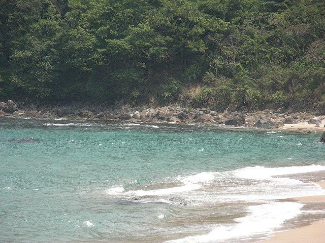 香住・安木の浜、東側の岩場、西側の岩場、浜の中央からとシロギスの大物が釣れる場所、鉄砲ギスを50尾、大きいものは30cmを釣った人もいた 。
