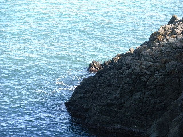 香住下ノ浜久津井港東横磯、海底は起伏に富んでおり、水深は浅い・・しかし、こんなところでと思うかもしれないが・・大スズキの実績場