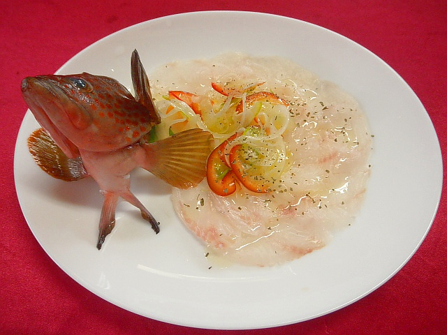 #キジハタのカルパッチョ #下処理した魚の切り身を薄切りにして器に並べ #スライスしたタマネギパプリカを盛り #ドレッシングをかけます。 #ドレッシングはオリーブオイル #ワインビネガー #バルサミコ酢 #レモン汁 #塩 #コショウで作ります