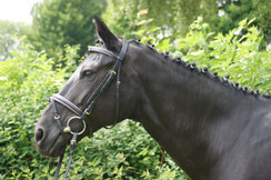 Laska - Black Beauty