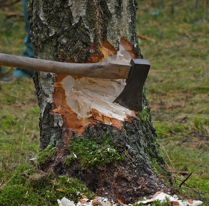 Ritual vor dem Baum fällen