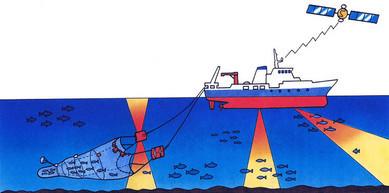 遠洋底曳き網漁業
