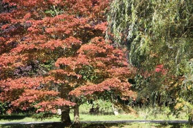 013_0045_16 Sept 2011_Gartenfest_Schlosspark
