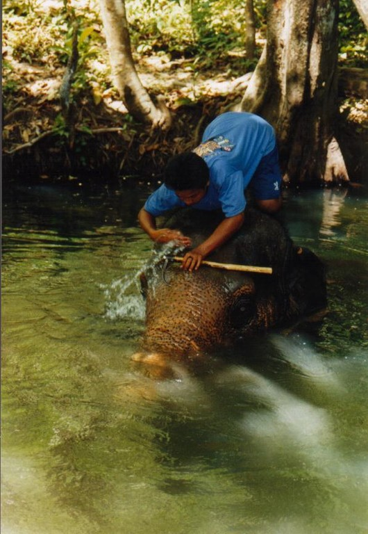 Elefanten-Trekking, Krabi