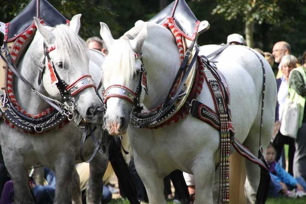 203_0732_19 Sept 2010_Gartenfest_Percheron-Pferde