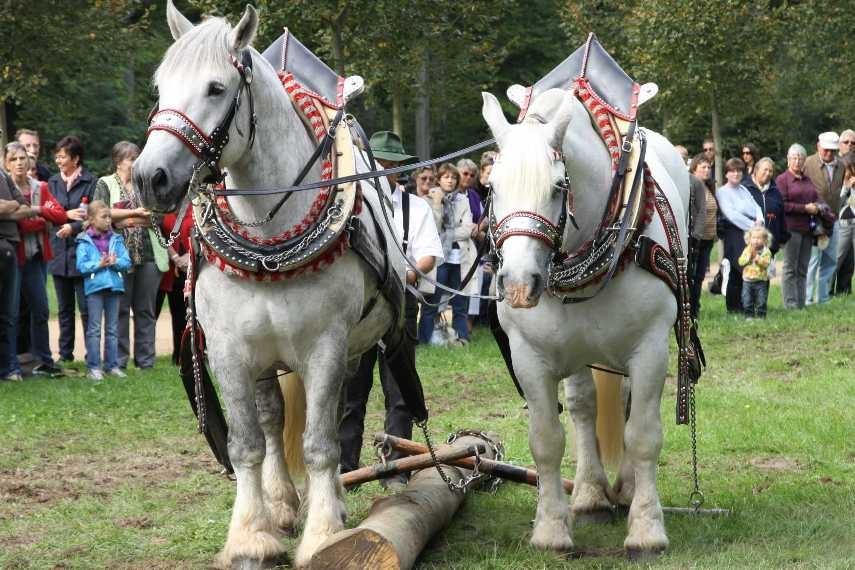 215_0759_19 Sept 2010_Gartenfest_Percheron-Pferde