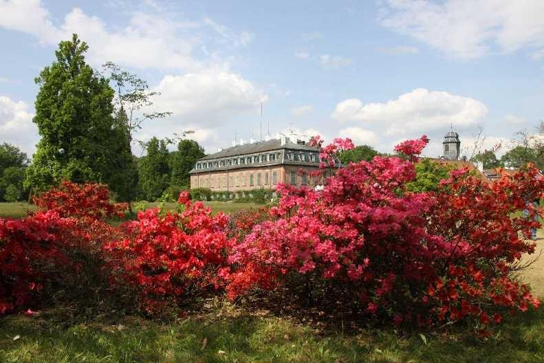 0284_19 Mai 2012_Rhododendron_Schloss Wolfsgarten_Blüte