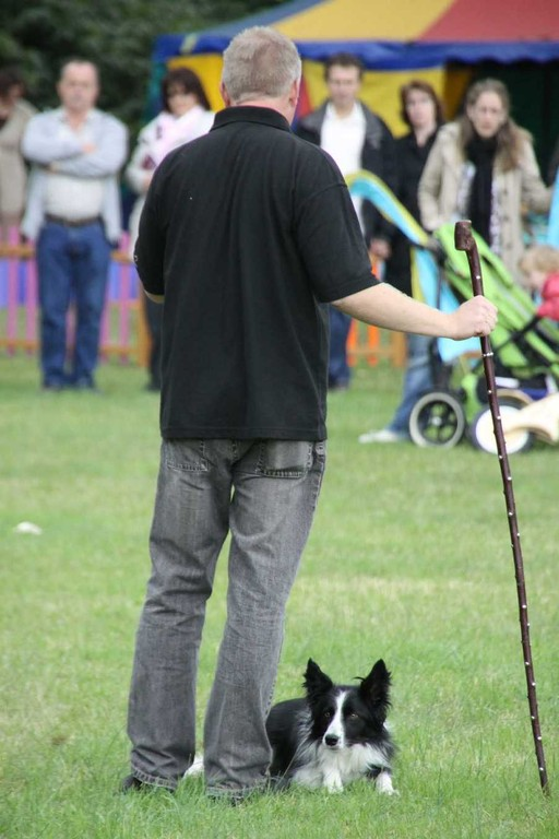 244_0526_18 Sept 2010_Gartenfest_Border-Collies