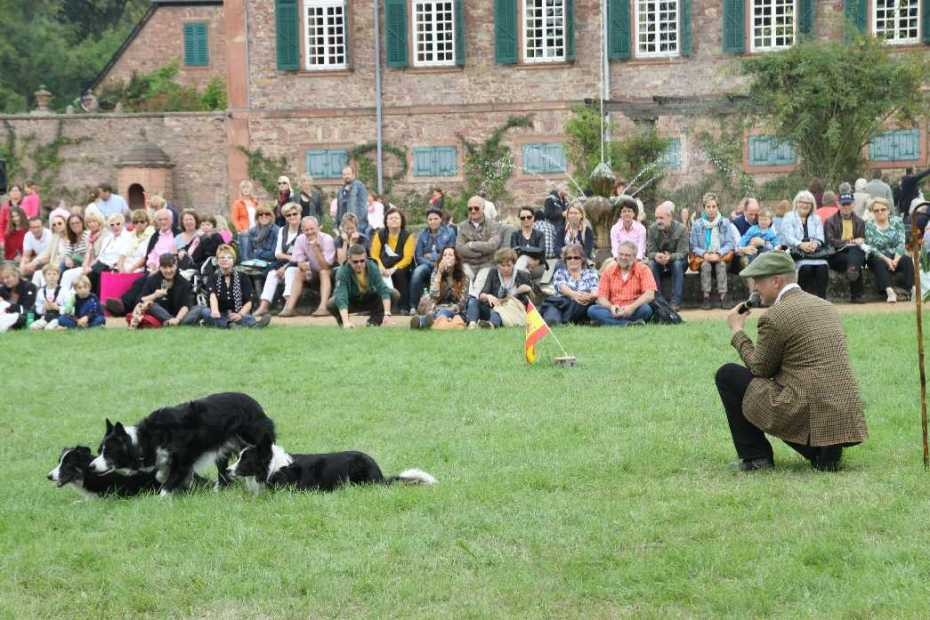 0264_22 Sept 2013_Gartenfest_Bordercollies & Heidschnucken