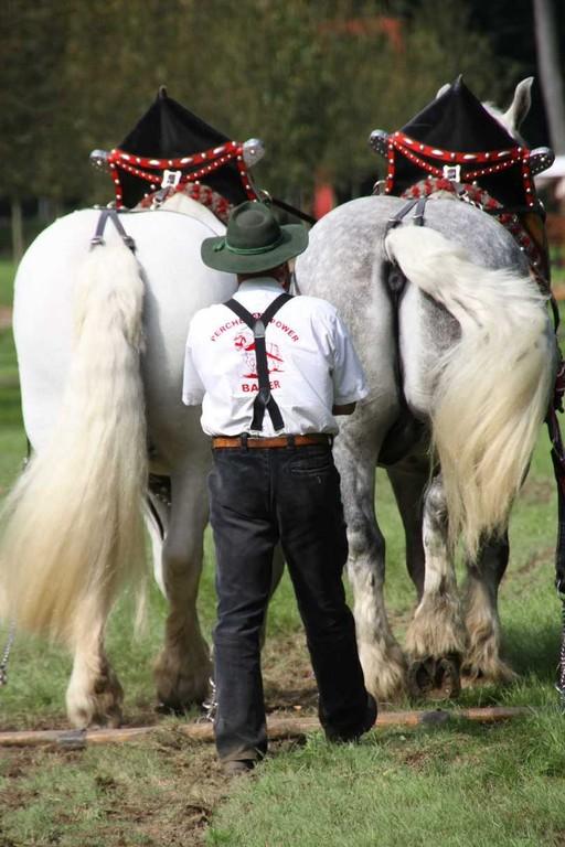 200_0727_19 Sept 2010_Gartenfest_Percheron-Pferde