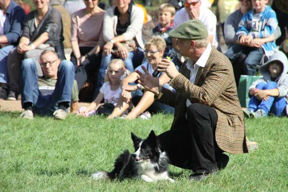 0112_22 Sept 2013_Gartenfest_Bordercollies & Heidschnucken