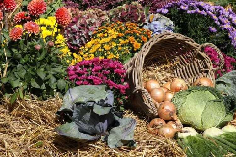 058_0165_17 Sept 2010_Gartenfest_Aussteller