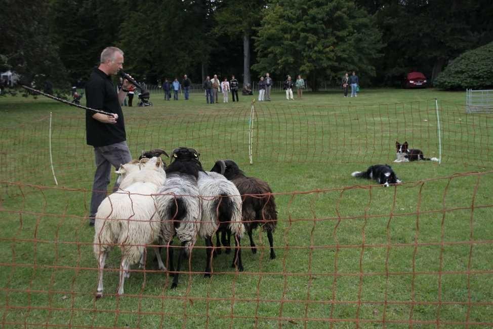 248_0539_18 Sept 2010_Gartenfest_Border-Collies
