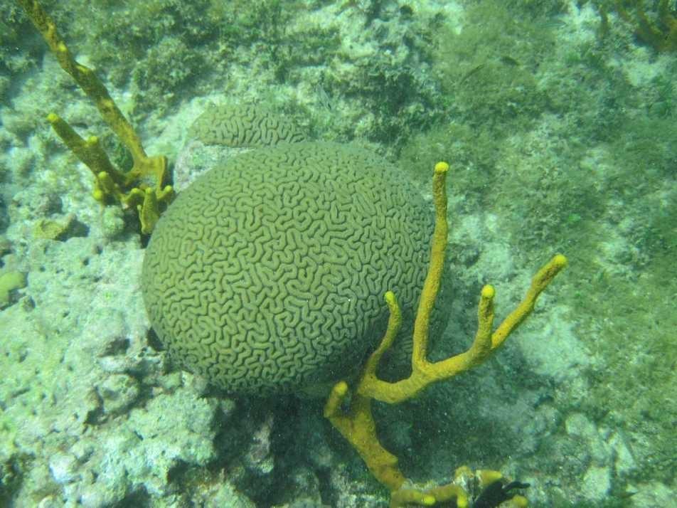 3101_02 DEZ 2013_Grenada_Shadowfax-Segeltörn_unter Wasser