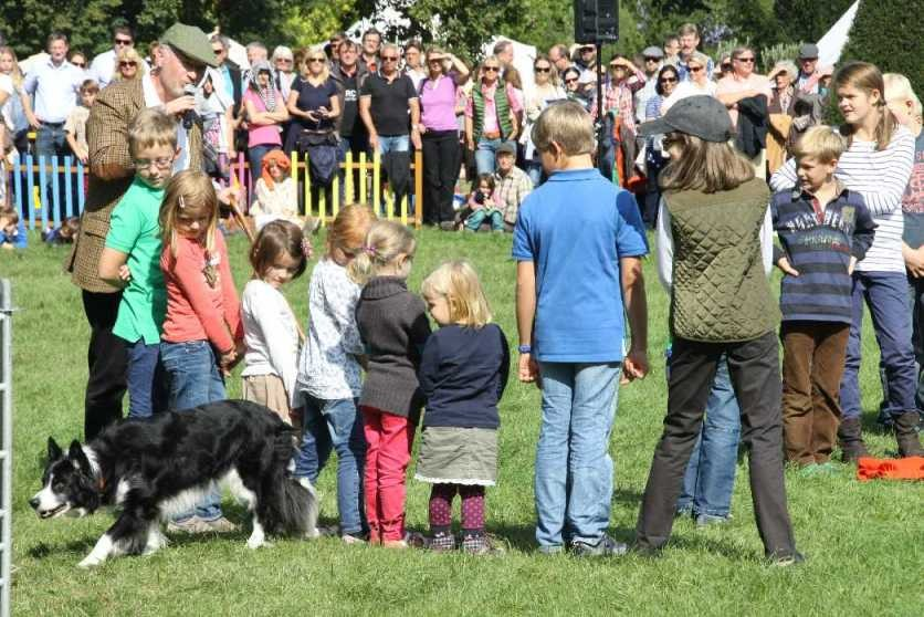 0120_22 Sept 2013_Gartenfest_Bordercollies & Heidschnucken