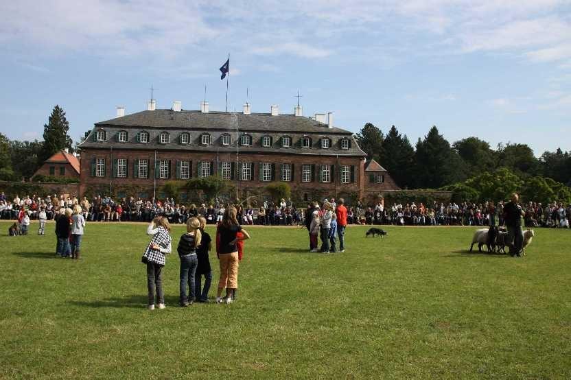 287_0658_19 Sept 2010_Gartenfest_Schloss Wolfsgarten_Border-Collies