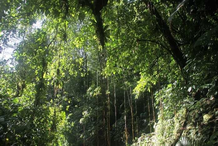 0945_25 NOV 2013_Dominica_Trafalgar Falls