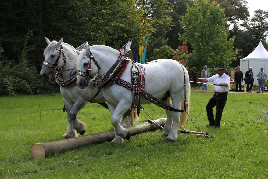 148_0125_17 Sept 2010_Gartenfest_Percheron-Pferde