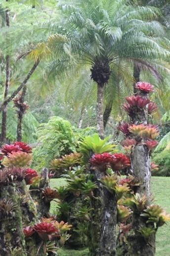 3997_05 DEZ 2013_Martinique_Jardin de Balata