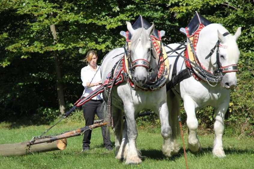 194_0379_17 Sept 2010_Gartenfest_Percheron-Pferde