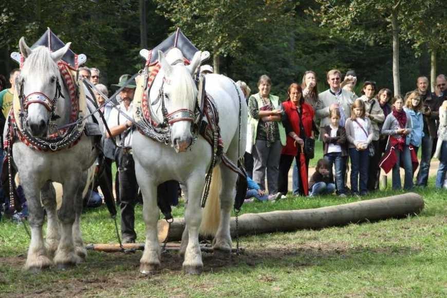 204_0734_19 Sept 2010_Gartenfest_Percheron-Pferde