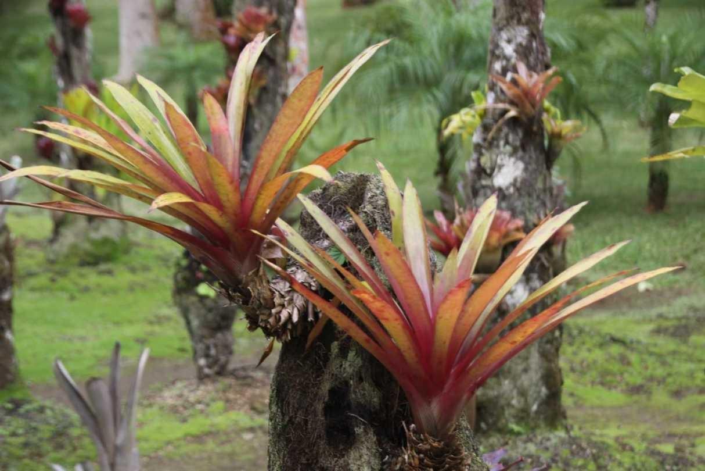 3989_05 DEZ 2013_Martinique_Jardin de Balata