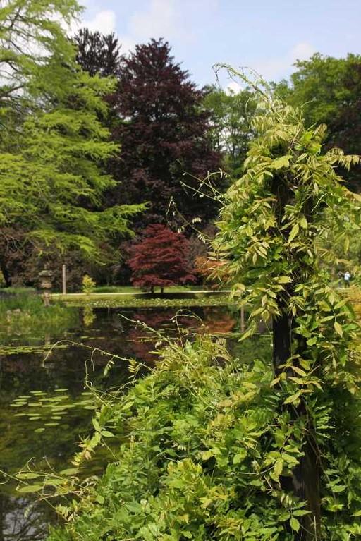 0090_19 Mai 2012_Rhododendron_Schlosspark_Teich