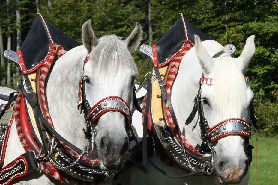185_0352_17 Sept 2010_Gartenfest_Percheron-Pferde