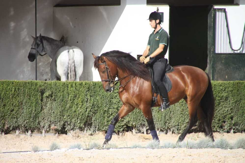 0386_11 Okt 2010_Jerez_Real Escuela Andaluza_Training