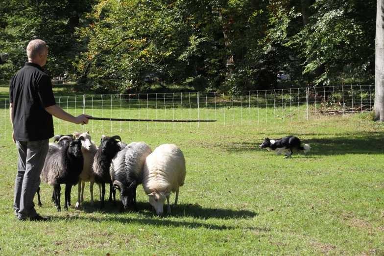 231_0401_17 Sept 2010_Gartenfest_Border-Collies