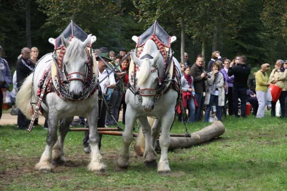 209_0746_19 Sept 2010_Gartenfest_Percheron-Pferde