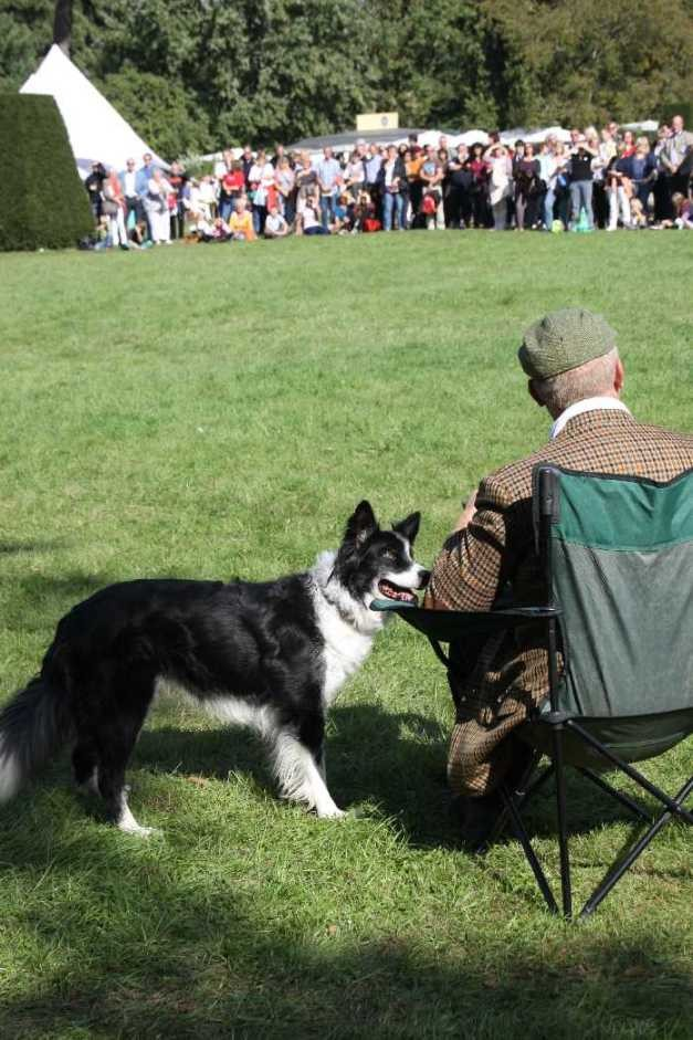 0154_22 Sept 2013_Gartenfest_Bordercollies & Heidschnucken