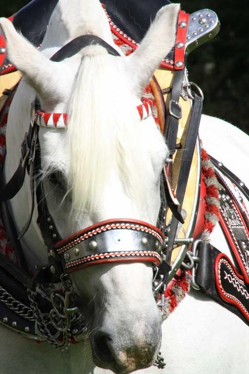 160_0148_17 Sept 2010_Gartenfest_Percheron-Pferde