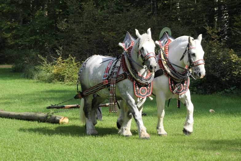 141_0101_17 Sept 2010_Gartenfest_Percheron-Pferde