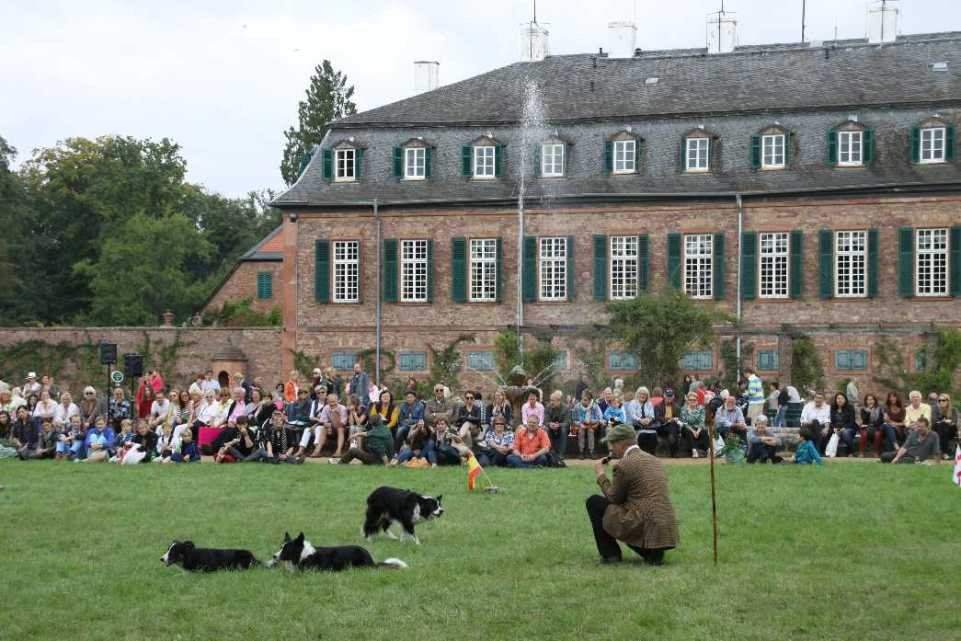 0262_22 Sept 2013_Gartenfest_Bordercollies & Heidschnucken