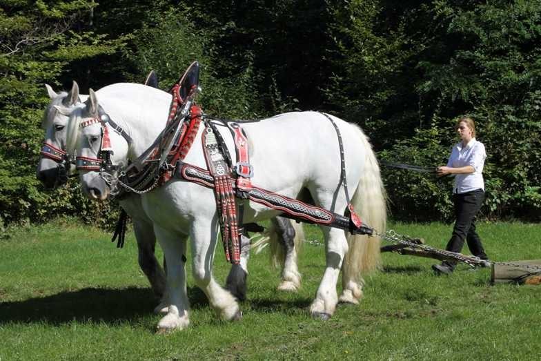 193_0377_17 Sept 2010_Gartenfest_Percheron-Pferde