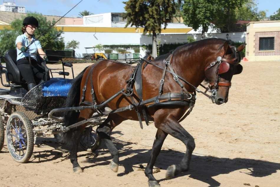 0444_11 Okt 2010_Jerez_Real Escuela Andaluza_Training